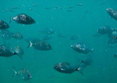 vision-submarina-isla-tabarca